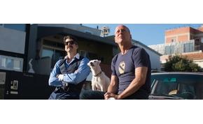 Bruce Willis nem csípi, ha elrabolják a kutyáját