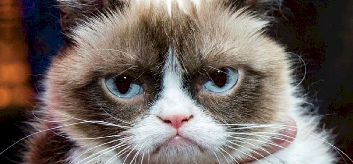 Index - Tech - Ez a macska többet keres, mint ön