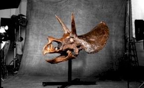 Triceratops koponya a nappaliban