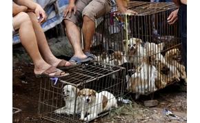 Valószínűleg megint lesz kutyahús fesztivál Kínában