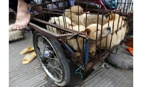 Ismét feldúlta az érzelmeket a jülini kutyahús-fesztivál