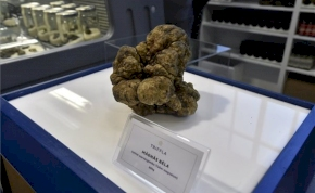 Milliós szarvasgombát találtak Baranyában
