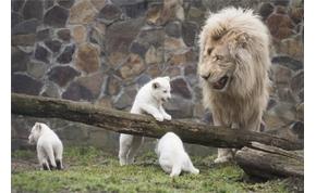 A Nyíregyházi Állatparkban született a legtöbb állatkölyök