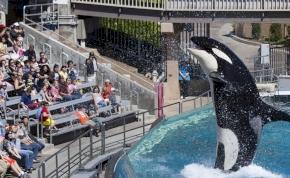 Már nem kínozzák sokáig a kardszárnyú delfineket