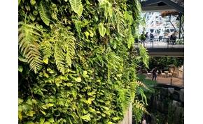 Ilyen egy esőerdő a város közepén