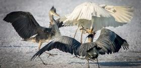 A trailer alapján megint csodálatos magyar természetfilm készül