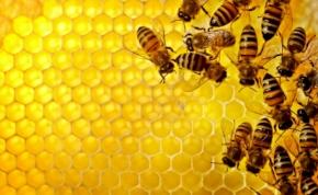 """Már """"kihallgathatjuk"""" a méhek ügyködését"""