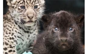 Első díjat kapott Nyíregyháza Európa állatkertjeinek versenyében