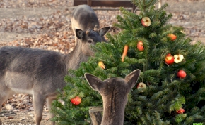 Állati karácsony lesz a Budakeszi Vadasparkban