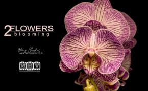 40 ezer fotó, 9 hónap munka, három perc: új, pompás timelapse az orchideákról