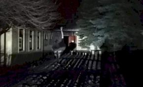 Túszokat szedett egy strucc Esztergomban
