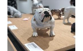 Hozzád milyen kutya illik? New York új múzeumában kiderül