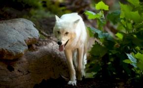 Sokkal több a veszélyeztetett állatfaj, mint korábban gondolták