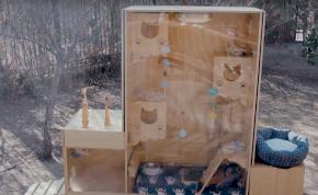 Okosotthon épült a kóbor cicáknak