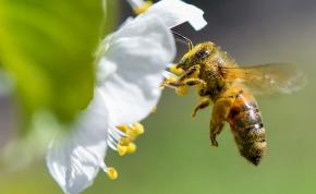 A méhek képesek összeadni és kivonni
