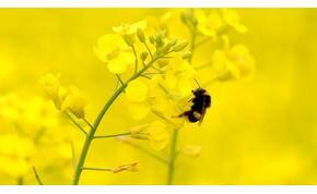 Az ökoszisztéma összeomlását hozhatja el a rovarok gyors ütemű pusztulása