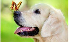 Kiderült: attól boldogok a kutyák, hogy szimatolhatnak