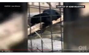 Jaguár támadott meg egy fiatal nőt egy arizonai állatkertben