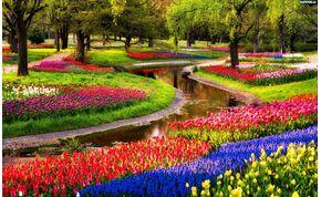 Hétmillió virággal nyílt meg a világ legnagyobb virágoskertje
