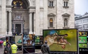 Országjáró turnéra indul a világhírű természetfotó-kiállítás