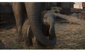 Dumbo: hogyan gyalázzunk meg ártatlan állatokat?