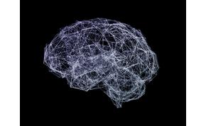 Ennyi adatot foglal el az agyban a nyelvismeret