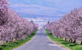 Versengenek a fotók hazánk talán legszebb tavaszi útjáról