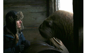Attenborough a természetfilmek legdrámaibb jelenetével figyelmeztet