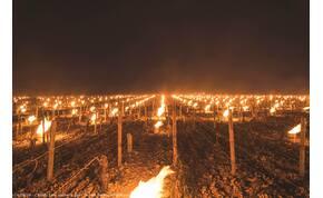 Franciaországban okkal gyújtották fel a szőlőket