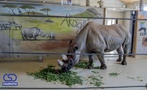 Új bemutatóházat kapott a győri állatkertben Mana és Wanda