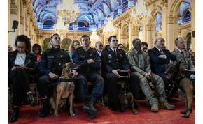 Hős kutyákat tüntettek ki Franciaországban