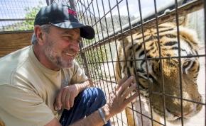 Rossz alanyra csapott le a tigris