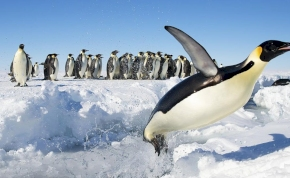 Pingvinek katasztrófáját fedezték fel az Antarktiszon