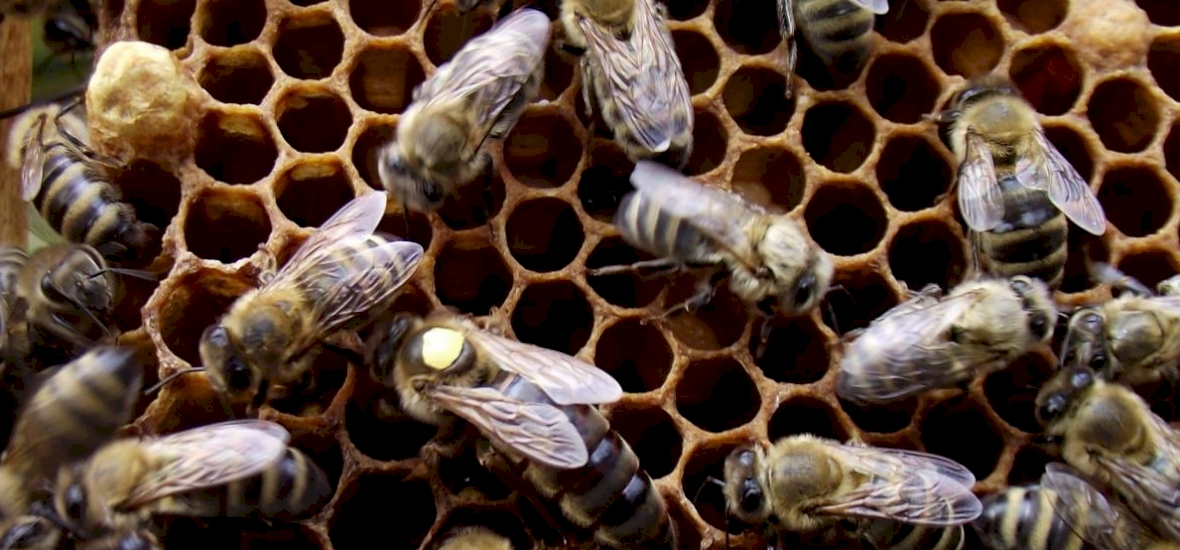 Félmillió méh pusztult el gyújtogatás miatt