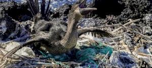 Döbbenetes erejű tanulmány készült bolygónk pusztulásáról