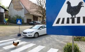 Európa közepén külön zebrán kelnek át a tyúkok