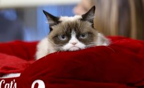 Elpusztult a morcos macska, Grumpy Cat