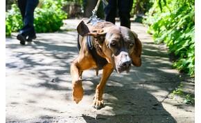 Génjeink döntik el, hogy kutyatulajdonosok leszünk-e