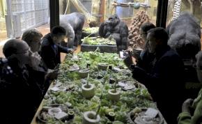 Gorillareggelivel kampányolt az állatkert a mobilok újrahasznosításáért