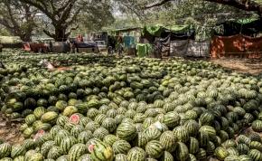 Az ókor egyik nagy birodalmában is olyan görögdinnyét ettek, mint mi