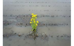Több eső esett szerdán, mint a májusi havi átlag
