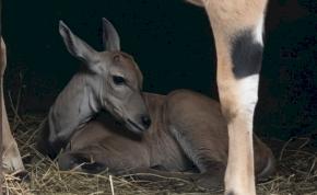 Ritka előkelőség született a Debreceni Állatkertben