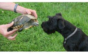 Egy kutya talált rá itthon a teknősök rekorderére