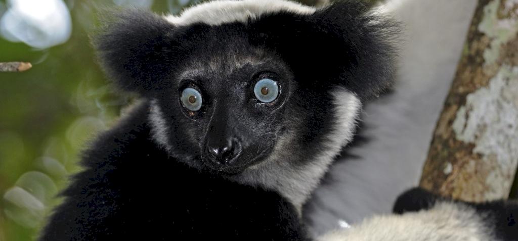 Halállista: állatfajok, amelyek kipusztulnak, mert megesszük őket