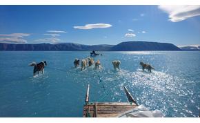 A grönlandi szánhúzó kutyák kereshetnek új munkát