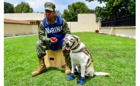 Tizenkét életet mentett meg a visszavonuló világhírű kutya – videó