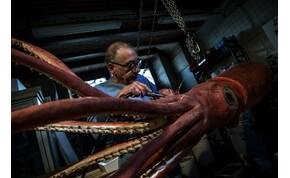 Videó bizonyítja, hogy létezik a rettegett, tízméteres tengeri szörny