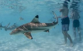 Sokkolta a fürdőzőket, amikor videón látták: cápák úsztak körülöttük