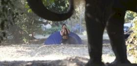 Az elefánt nem akart a fotókon szerepelni, így pofonvágta a lányt – videó