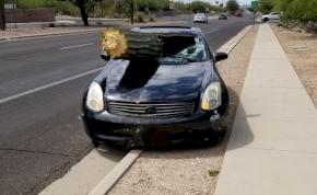 Olyan részeg volt a sofőr, hogy beleszállt egy kaktuszba